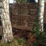 Pose de la clôture en noisetier