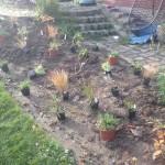 Disposition des plantations de graminée et viivaces