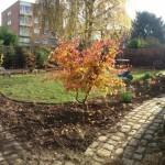 Plan large d'un automne ensoleillé