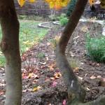 Intégration de l'escalier naturel dans le jardin