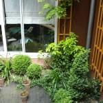 La végétation au cœur du patio