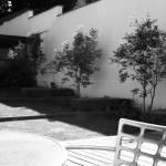 blackandwhite garden