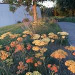 plateaux fleuris