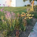Fleurs et associations de plantes